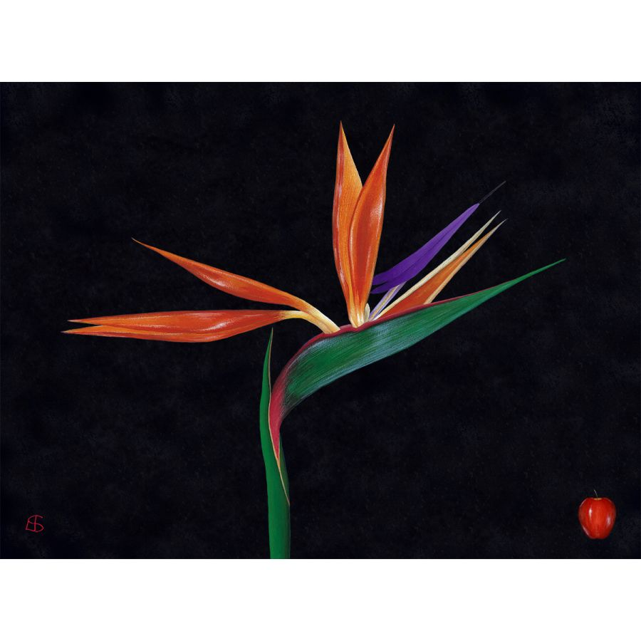 Bird of Paradise on Black Table Mats