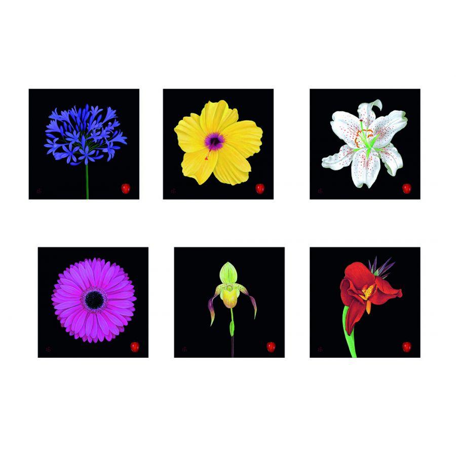 6 Flowers on Black Coasters