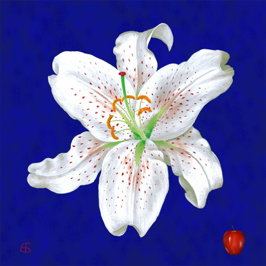 White Lily on Blue Coasters