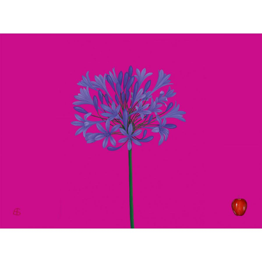Agapanthus on Pink Table Mats