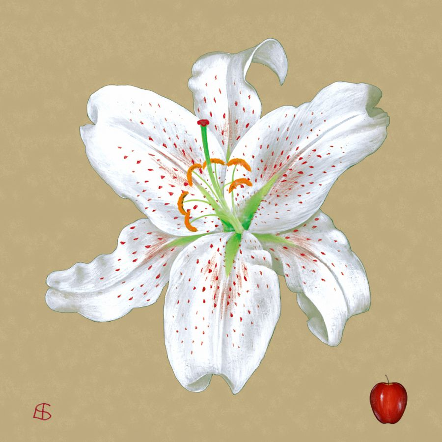 White Lily on Gold Coasters