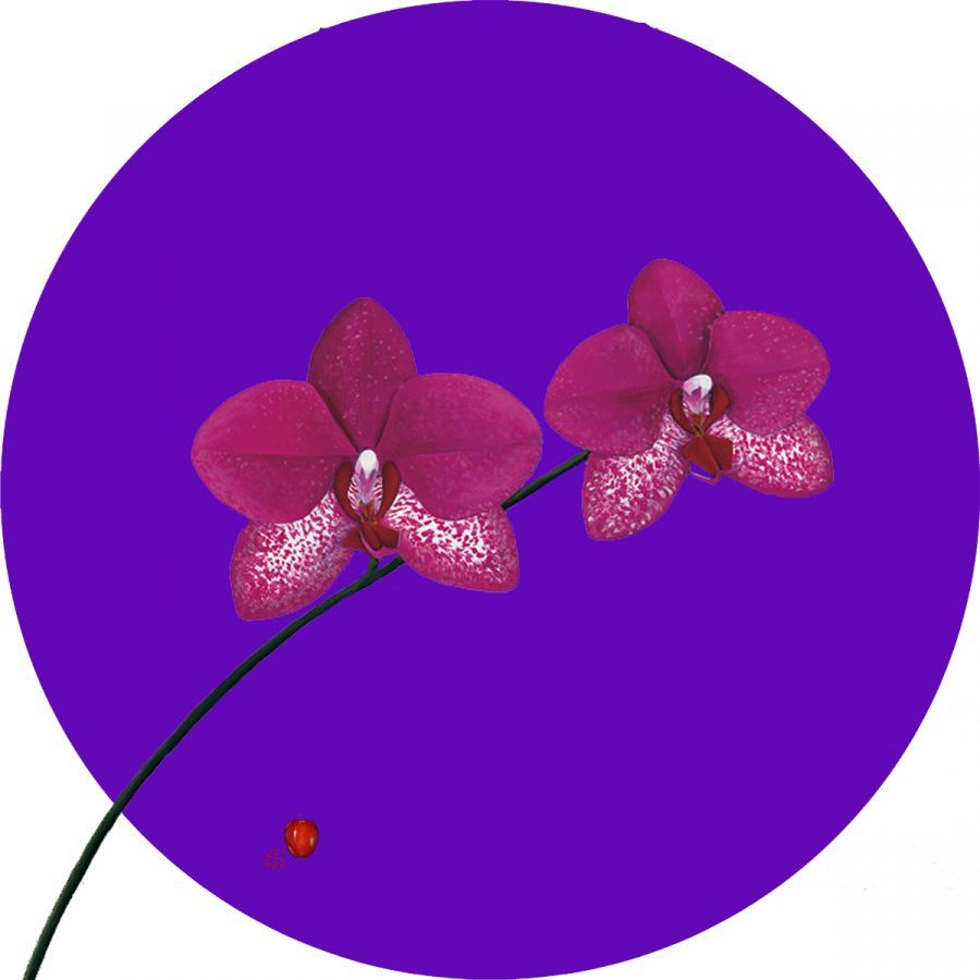 Pink Orchid on Purple Glass Trivet