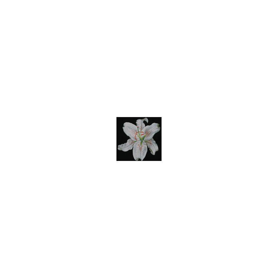 White Lily Black Cotton Apron