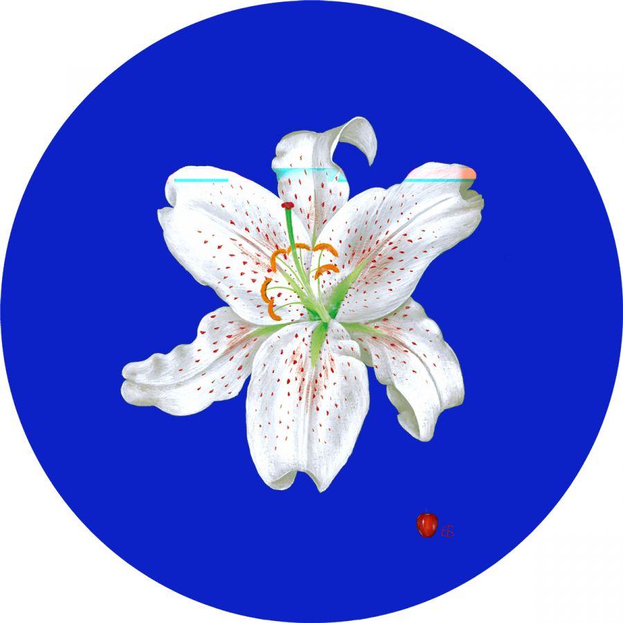 White Lily' on Blue Trivet