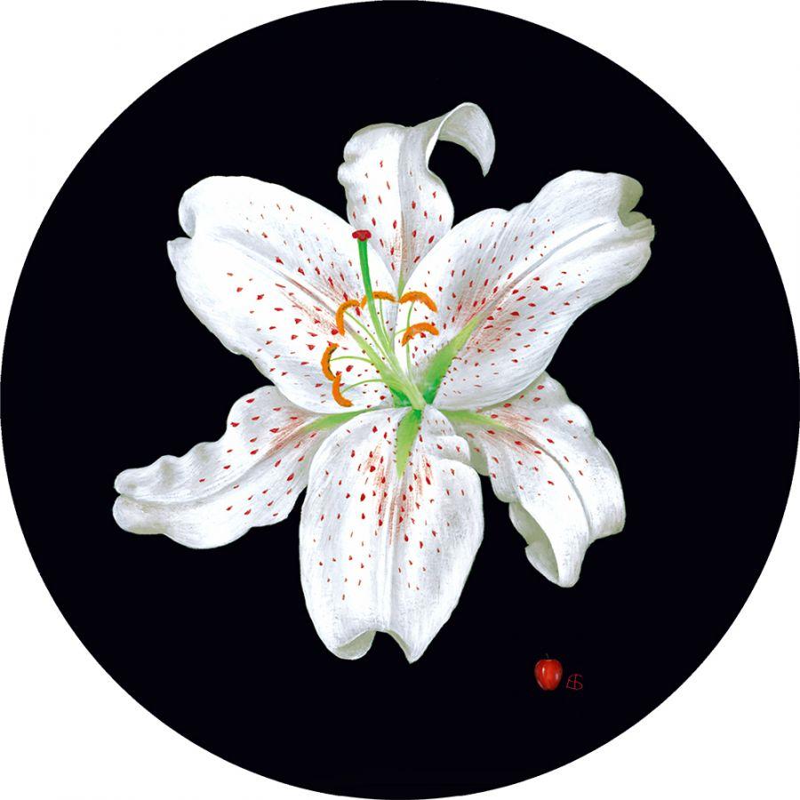 White Lily on Black - Round Coasters