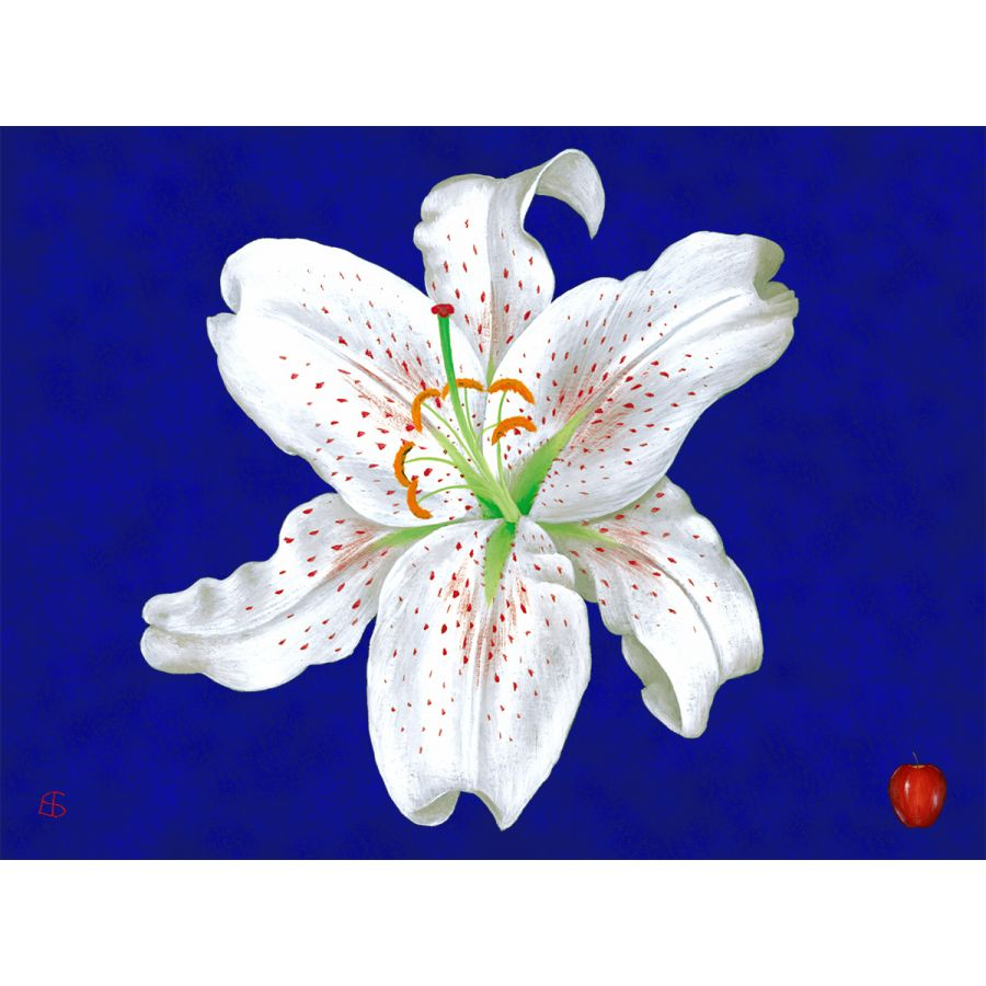 White Lily on Blue Table Mats